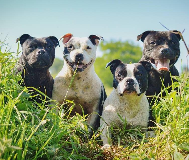 West Cork Dog Rescue
