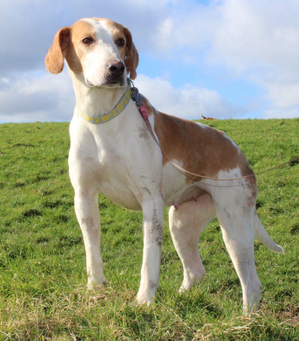 Cork Animals: Animal Welfare Ireland